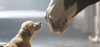 Super Bowl halftime and commercials outshine game