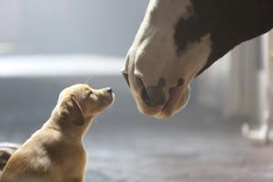 2014 Super Bowl commercials