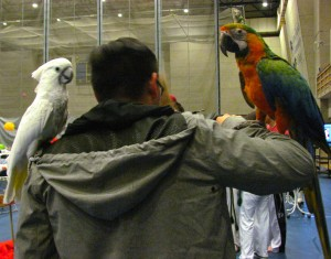 Parrots from Casa la Parrot sit on the arms of GRCC student Giovanni Hernandez, 19, at the Global Experience Festival. Photo by Jacquelyn Zeman
